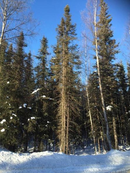 3790 N. Wyoming Dr., Wasilla, AK 99623 Photo 4