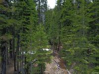 Home for sale: 7177 Sierra Pines Rd., Twin Bridges, CA 95721