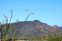 Home for sale: 39783 N. Ocotillo Ridge Dr., Carefree, AZ 85377