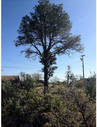 2216 Santa Fe Spgs, Prescott, AZ 86305 Photo 6