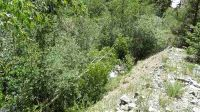 Home for sale: Block 5 Lot 1 Hwy. 150, Taos Ski Valley, NM 87525