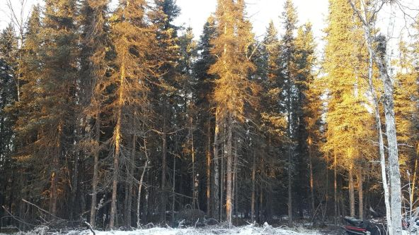 14613 E. Wilderness Rim, Willow, AK 99688 Photo 17