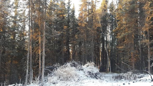 14613 E. Wilderness Rim, Willow, AK 99688 Photo 16