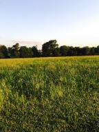 Home for sale: 4.51 Acres Zenith Ln., Walnut Grove, MO 65770