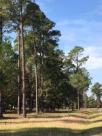 Home for sale: Lot 31 Cannon Branch Rd., Cordele, GA 31015