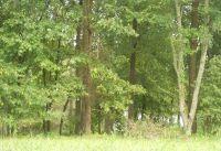Home for sale: 115 W. Barons Run, Spring Lake, NC 28390