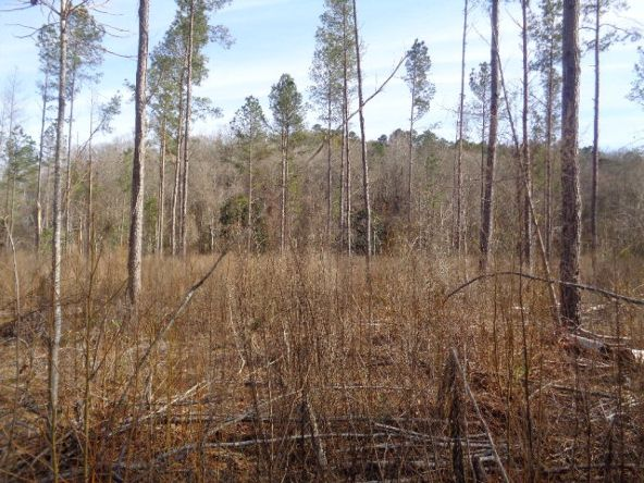 275+/-Ac Cty Rd. 46/Cty Rd 97, Abbeville, AL 36310 Photo 47