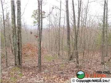 4215 Citadel Rock Rd., Fort Payne, AL 35967 Photo 4
