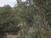 Home for sale: Unit 8, Lot 81 C, Ranchos del Vado, Tierra Amarilla, NM 87575
