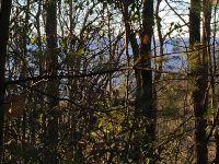 Home for sale: Tr 8 Cherry Log, Cherry Log, GA 30522