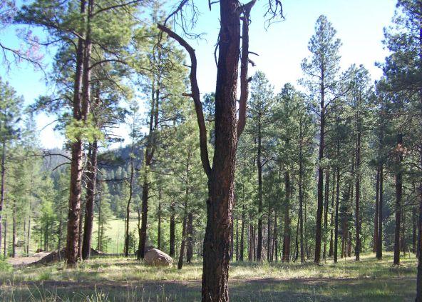 10 County Rd. 2153, Alpine, AZ 85920 Photo 5