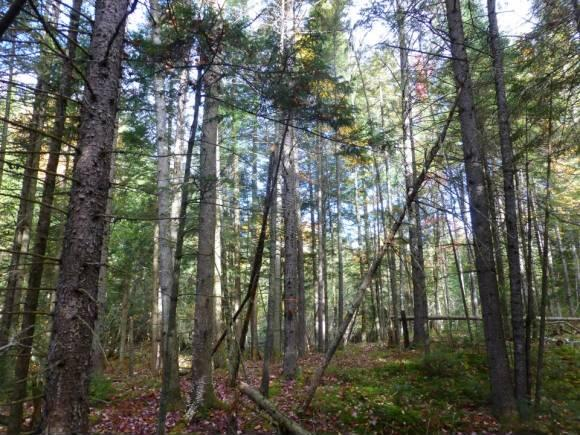 Lot #6 Woodland Dr., North Troy, VT 05859 Photo 5