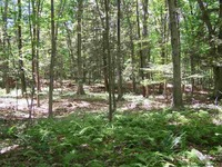 Home for sale: Tbd Martin Sweedish Rd., New Paltz, NY 12561