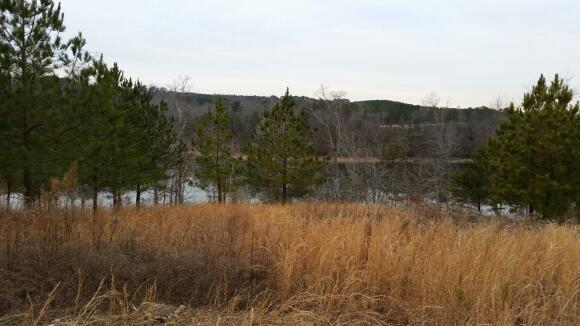 380 Co Rd. 907 (Lot 16), Crane Hill, AL 35053 Photo 6