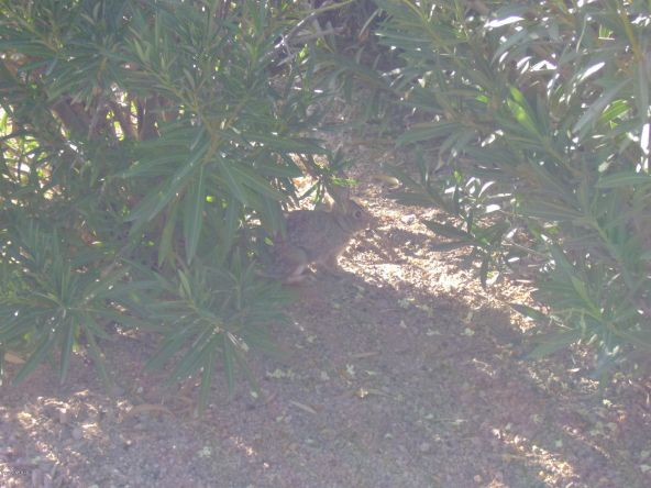 16830 E. Jacklin Dr., Fountain Hills, AZ 85268 Photo 48