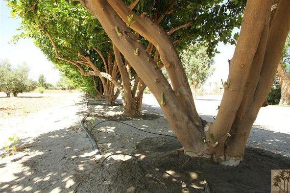80865 Vista Bonita Trail, La Quinta, CA 92253 Photo 33