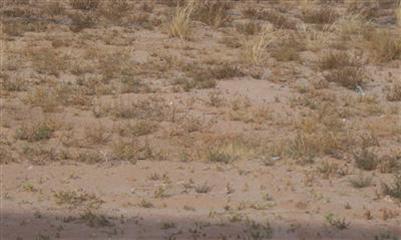 Hwy. 304, Belen, NM 87002 Photo 11