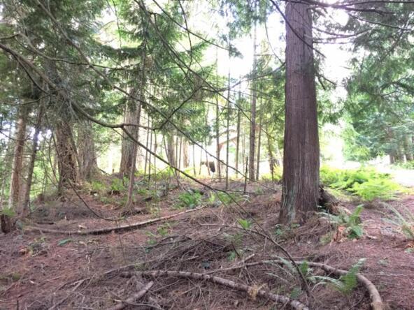 1 Thunder Peak Way, Bellingham, WA 98229 Photo 2