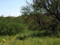 Home for sale: Lot O19g N. Off Cascabel, Benson, AZ 85602