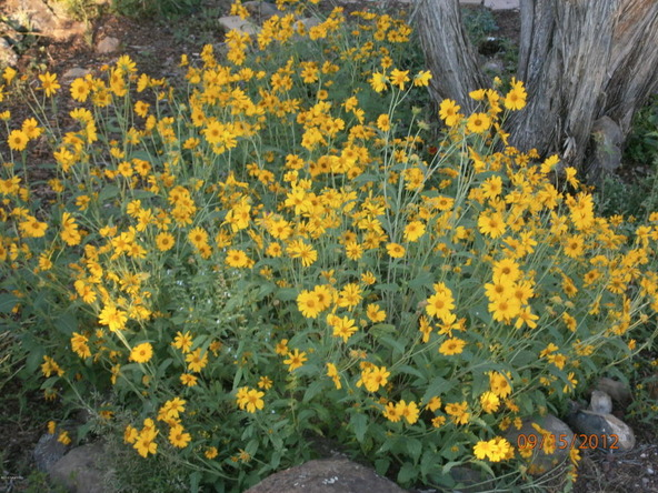 10922 S. High Mesa Trail, Williams, AZ 86046 Photo 56