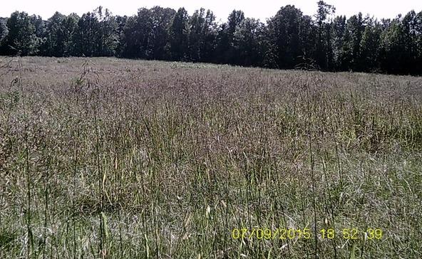 432 Cr 3355, Clarksville, AR 72830 Photo 26