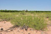 Home for sale: Tbd Drifter's., McNeal, AZ 85617