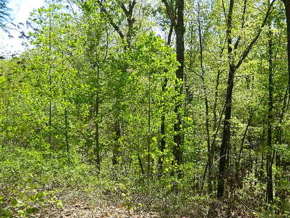 Lot 8 Teel Point, Cleveland, GA 30528 Photo 31