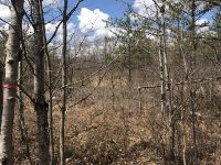 Home for sale: Lot 1&2 Graf Rd., Tomahawk, WI 54487