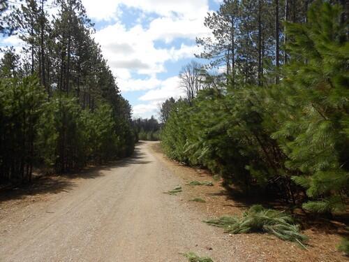 Lot 7 On Towering Pines Ln., Rhinelander, WI 54501 Photo 9
