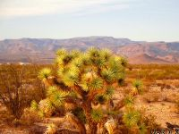 Home for sale: 0000 Richard Rd., Yucca, AZ 86438