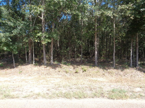 31.2 Ac Johnny Murphy Rd., Dothan, AL 36301 Photo 18