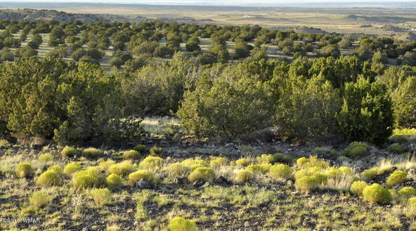 199.54 Acres, Concho, AZ 85924 Photo 18