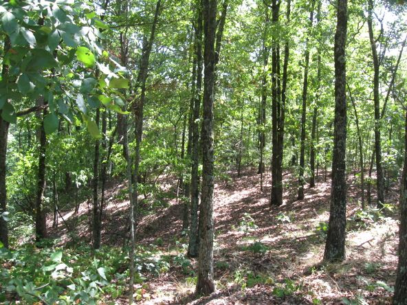 16.38 Acres Layer Ln., Harrisburg, AR 72432 Photo 7