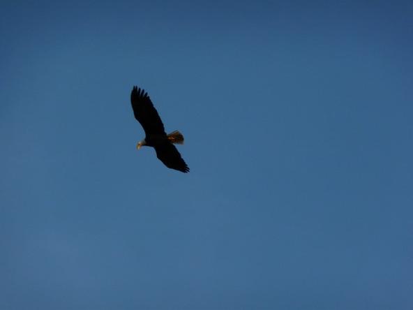 1125 Scenic Dr., Lummi Island, WA 98262 Photo 12