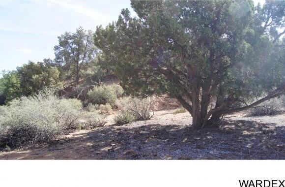 9999 N. Trap Springs Rd., Hackberry, AZ 86411 Photo 27