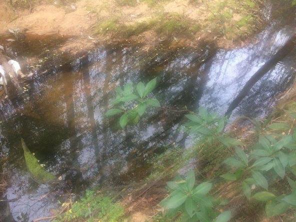30460 D'Olive Ridge, Daphne, AL 36527 Photo 10