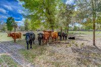 Home for sale: 22250 Deer Park Ave., Eustis, FL 32736