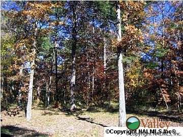 3 County Rd. 935, Mentone, AL 35984 Photo 3