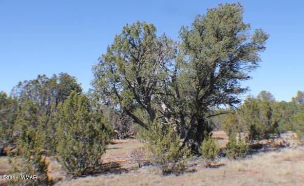 2 Acres Off Of Acr N. 3114, Vernon, AZ 85940 Photo 14