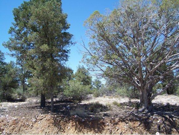 6735 W. Almosta Ranch Rd., Prescott, AZ 86305 Photo 1