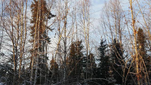 14613 E. Wilderness Rim, Willow, AK 99688 Photo 14