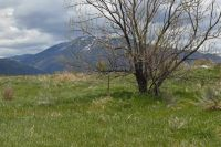 Home for sale: Behind 338 Hondo Seco Rd., Arroyo Seco, NM 87571