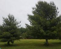 Home for sale: 00 Fork Landing Rd., Felton, DE 19946