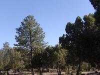 Home for sale: 1741 E. Tosca Pl., Pinedale, AZ 85934