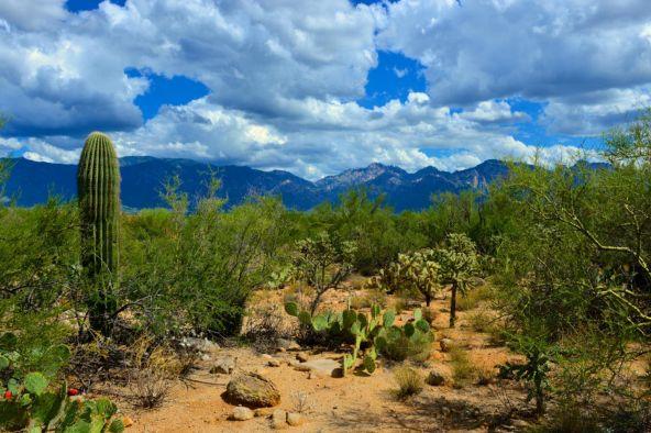 14601 N. Quiet Rain Dr., Oro Valley, AZ 85755 Photo 11