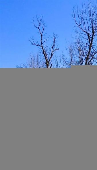 1252 Nc 3600 Rd., Western Grove, AR 72685 Photo 38