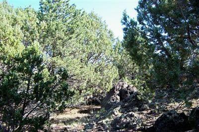 1419 W. Maverick Ln., Williams, AZ 86046 Photo 4