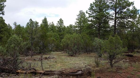 15.64 Ac Near Airport, Overgaard, AZ 85933 Photo 1