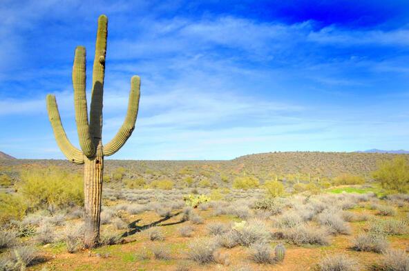 14340 E. Desert Tortoise Trail, Fountain Hills, AZ 85268 Photo 16