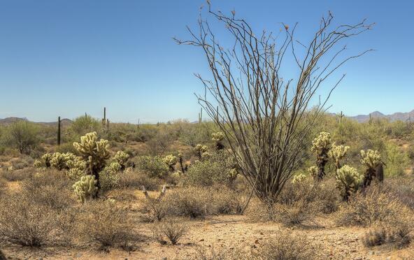 17400 E. Lowden Rd., Scottsdale, AZ 85262 Photo 13